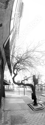 Valokuva life makes its way, allegorical photograph of a tree changing the direction of the branches due to the presence of a building, suitable at a time of worldwide emergency for covid-19, coronavirus