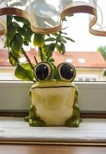 Closeup Shot Of A Cute Porcela...