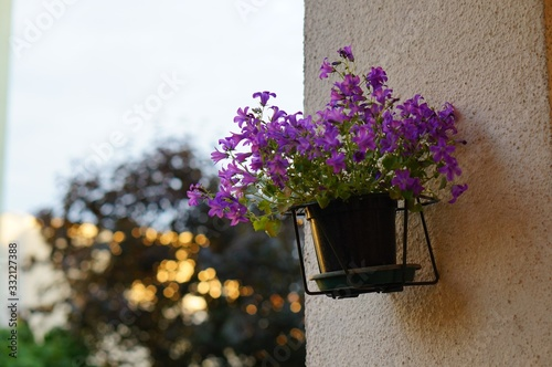Violet flowers on a pot hanging on a wall during daytime