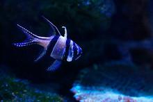 Exotic Fish In Aquarium In Lan...