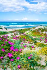 Panel Szklany Optyczne powiększenie Flowers by the sea in Platamona shore