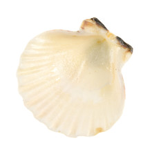 Sea Shell Isolated On White Ba...