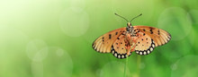 Beautiful Butterfly On A Green...