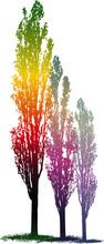 Magic Poplar Trees