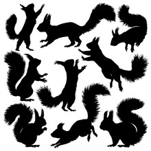 Squirrel Silhouette. Set. Vect...