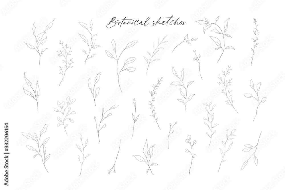 Fototapeta Botanical line art leaves hand drawn pencil sketches isolated on white background. Fine art floral elegant delicate graphic clipart for wedding invitation card. Vector illustration