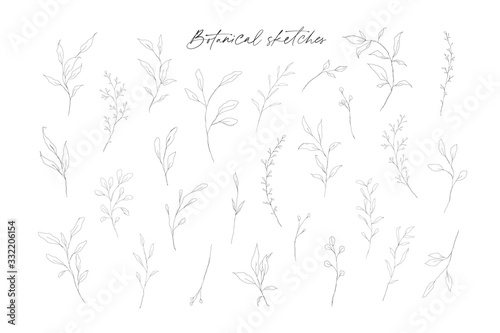 Obraz na plátne Botanical line art leaves hand drawn pencil sketches isolated on white background