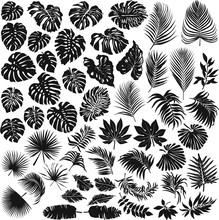 Tropical Leaves Vector Silhoue...