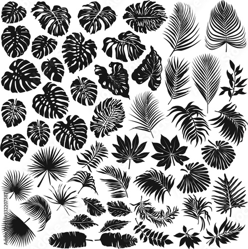 Obraz Tropical leaves vector silhouette collection - fototapety do salonu