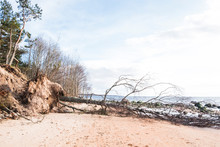 Fallen Trea On A Beach