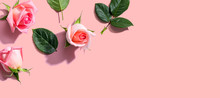 Pink Roses With Green Leaves O...