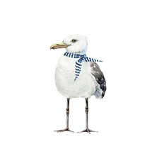 White Bird Seagull With A Scarf In A Marine Style, Watercolor Illustration