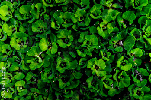 green abstract background - 332227185