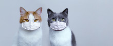Two Cats In Medical Protective...