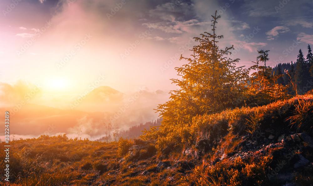 Fototapeta stunning morning summer view, spectacular sunrise slope with tree on background foggy valley,  splendid dawn nature landscape, Europe, Ukraine - Romania, Carpathians, Marmarosy