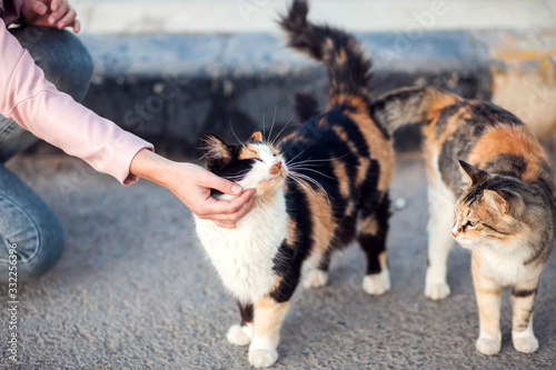 Fotografia Woman stroking a homeless cute cats on the street