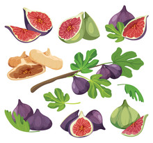 Common Fig With Leaves. Figs Compositions For Product Packaging.