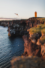 View From The Cliff Of Svortuloft Lighthouse In Snaefellsjokull National Park, Iceland. Orange Colorful Sunset, Flying Bird Seagull, Good Sunny Weather.