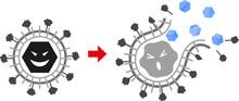 Envelope-virus-Extermination