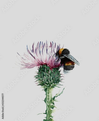 Fotografia bumblebee and Thistle watercolor illustration