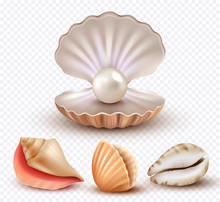 Realistic Seashells. Mollusk Shells Ocean Beach Objects Luxury Pearls Open Concha Vector Collection. Pearl Shell Mollusk, Ocean Seashell Illustration