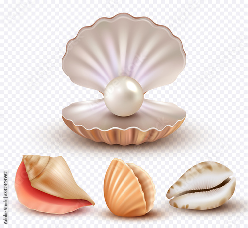 Stampa su Tela Realistic seashells