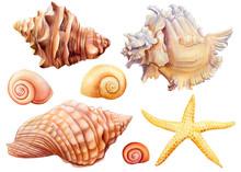 Watercolor Set Of Seashells An...