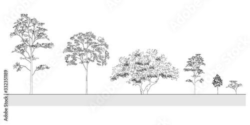 Fototapeta Side view, set of graphics trees elements outline symbol for architecture and landscape design drawing. Vector illustration obraz