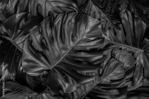 tekstury-naturalnych-streszczenie-czarne-liscie-na-tle-lisci-tropikalnych-obrazy-czarno-biale