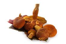 Boletus Ferrugineus (Xerocomus Spadiceus) Mushrooms On Autumn Grape Leaves. Delicacy