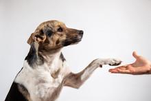 Dog Paw And Human Hand Doing A...