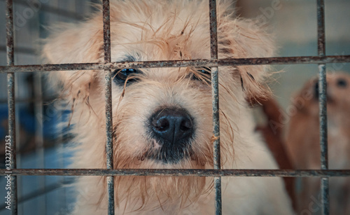 Sad dog in shelter waiting to be rescued and adopted to new home Canvas Print