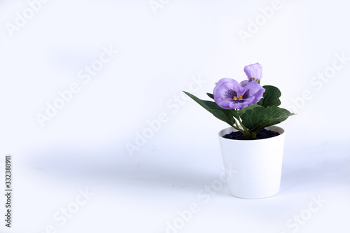 artificial violet isolated on white background horizontal image