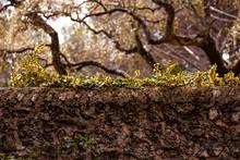 Muro De Piedra Con Hojas Verdes