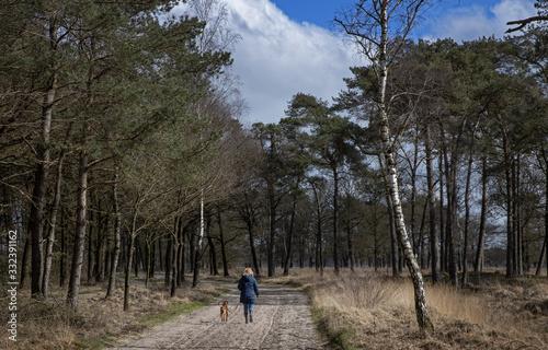 Fototapeta Peet and heatherfields. Drents-Friese Wold National Park. Doldersumse veld. Netherlands. obraz na płótnie