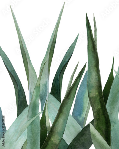 Agave leaves Canvas Print
