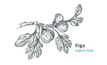 Figs Branch. Vector Nature Tre...