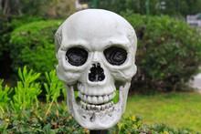 Replica Of Human Skull At A Pa...