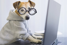 Computer Laptop Using By Funny Nerd Dog In Jumper. Looking To The Camera Pet Programmer. Remotely Working. Freelancer Work From Home. Distract From Task. Horizontal Photo. Quarantine Social Distancing
