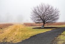 Solitary Tree In A Mist-shroud...