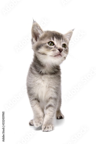 cat isolated on white background Poster Mural XXL