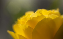 Beautiful Close Ups Of Spring Colored Flowers In Bloom, Dandelions Or Leaves With Delicate Details And Gentle Sun Light And Bokeh Backgrounds.