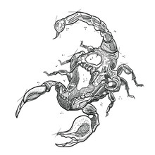 Skull Scorpion Illustration In...