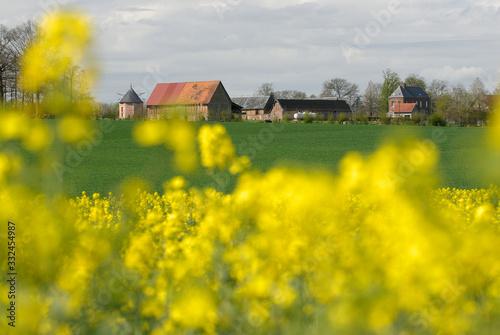 Fotografiet Champ de colza en fleur, corps de ferme en arrière plan