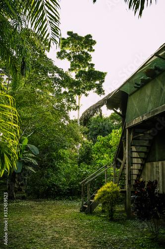 Photo green selva amazonia bosque cabaña de madera