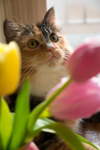 Cute Cat Looking Through Bouquet Of Flowers