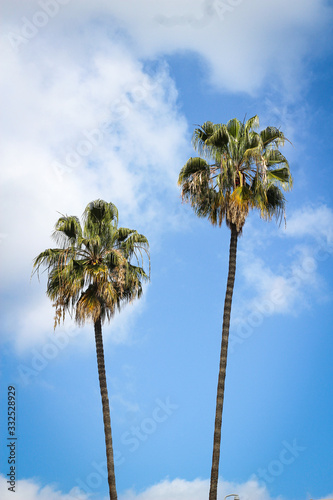 palm trees against blue sky Wall mural