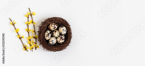 Foto Beautiful Easter decoration with quail eggs in the nest and yellow forsythia flowers on a white background