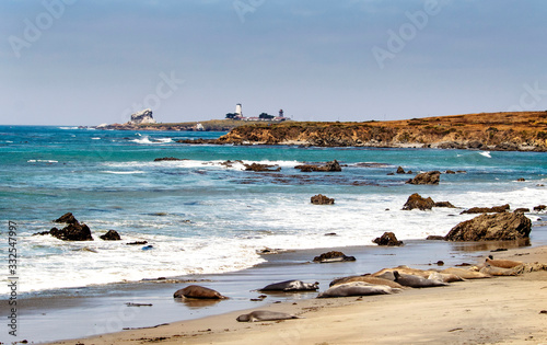San Simeon, California, Elephant Seals,Pacific Coast, Route 1 Fototapeta
