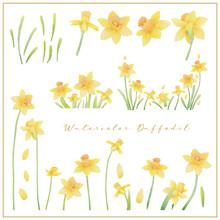 Watercolor Daffodil Flowers Co...
